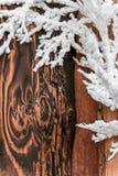 圣诞节霍莉边界装饰 库存照片