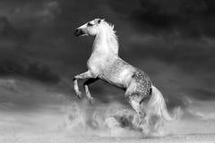 抚养的马 免版税库存照片