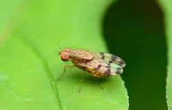 Μικρό έντομο Στοκ εικόνα με δικαίωμα ελεύθερης χρήσης