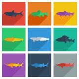 Комплект пресноводной рыбы с концепцией тени плоской Стоковые Изображения RF