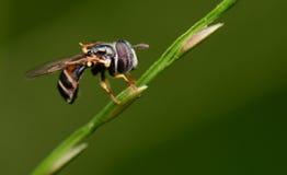 Μικρό έντομο Στοκ φωτογραφία με δικαίωμα ελεύθερης χρήσης