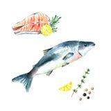 水彩三文鱼 库存图片