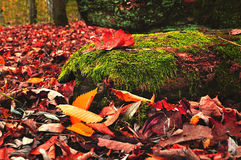 在有雾的天气的色的秋天风景 免版税库存照片