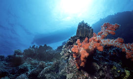 小船斐济 免版税图库摄影