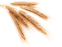 耳朵麦子 免版税图库摄影