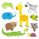 动物逗人喜爱的集 婴孩背景复制空间文本 考拉、鳄鱼、长颈鹿、鬣鳞蜥、斑马、牦牛、乌龟、大象、鸭子和鹦鹉 平的设计 免版税库存图片