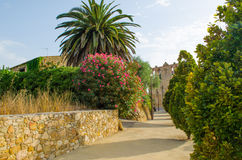 沿教会走道的开花的灌木 免版税库存照片