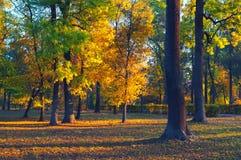 显示森林的美好的风景在晴朗的夏日 免版税图库摄影
