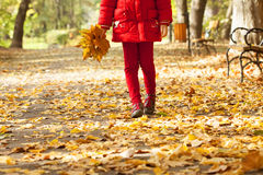拿着五颜六色的叶子的女孩在公园 免版税库存图片
