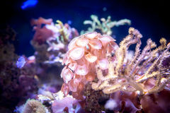 在水族馆的珊瑚礁 库存图片