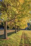 树行与秋叶的 库存图片