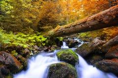 有山小河的秋季森林 库存照片