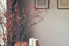 在家庭内部的干莓果棍子植物布置 图库摄影