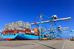 端起有集装箱船的船坞和运输货柜的各种各样的品牌和颜色在一个举行的平台堆积的 免版税库存照片