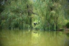 镇静池塘 库存照片