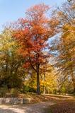 秋天和明亮的颜色 秋天童话林木 免版税库存图片