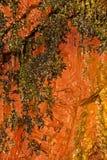 Текстура каменной стены предпосылки естественная влажная оранжевая Стоковая Фотография RF