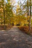 秋天和明亮的颜色 秋天童话林木 免版税库存照片