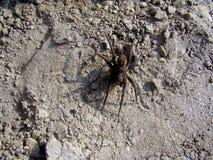 在裂片的蜘蛛 免版税图库摄影