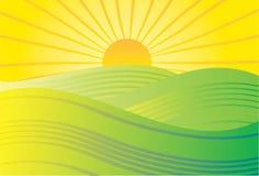 солнце поля Стоковое Изображение RF