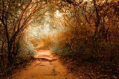在热带密林森林的幻想风景有隧道的 免版税库存图片
