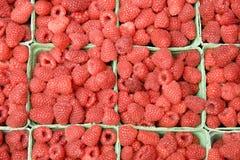 莓 图库摄影