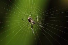 Μικρά έντομο και ζωύφιο Στοκ εικόνα με δικαίωμα ελεύθερης χρήσης