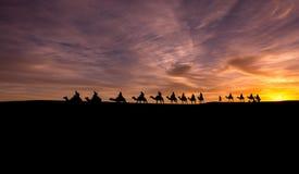 Караван в пустыне Сахары Стоковые Фото