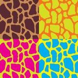 无缝的五颜六色的抽象图表斑马和长颈鹿镶边文本 免版税库存图片