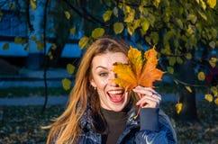 使用与下落的秋天黄色的年轻快乐的逗人喜爱的女孩妇女在公园离开在树附近,笑和微笑 免版税库存照片