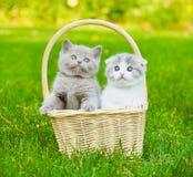 在篮子的两只小猫在绿草 免版税库存图片
