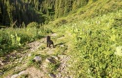 лето серии природы гор Стоковое Фото