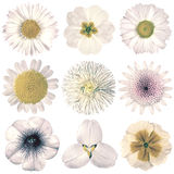 Различный винтажный ретро выбор цветков изолированный на белизне Стоковые Фото