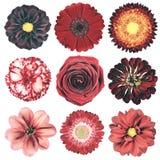 Различный винтажный ретро выбор цветков изолированный на белизне Стоковое фото RF