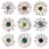 Различный винтажный ретро выбор цветков изолированный на белизне Стоковые Фотографии RF