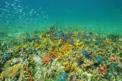 在海底上的五颜六色的海洋生活 免版税库存照片