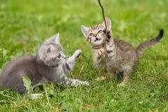 γατάκια εύθυμα Στοκ φωτογραφίες με δικαίωμα ελεύθερης χρήσης
