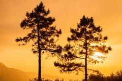 与光的两棵杉树早晨 免版税库存照片