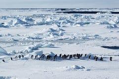 南极行军企鹅 免版税库存照片