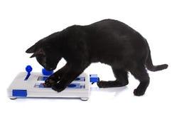 猫的聪明的玩具 免版税库存图片