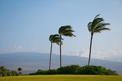 棕榈树大风 图库摄影