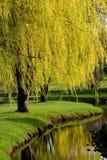 χρονικά δέντρα άνοιξη Στοκ εικόνα με δικαίωμα ελεύθερης χρήσης