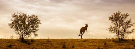 Кенгуру и австралийский заход солнца Стоковые Изображения RF