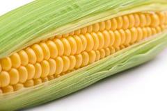 在白色特写镜头的新鲜的玉米玉米 免版税图库摄影
