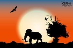 橙色日出在有老树、鸟和大象的密林 免版税库存图片