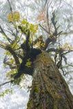 在薄雾的树冠 免版税库存图片