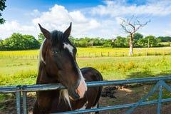 马在畜栏 库存图片