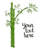 与绿色叶子的传染媒介竹子 库存照片
