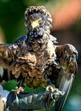 το πουλί προσεύχεται τα σπάνια είδη Στοκ εικόνες με δικαίωμα ελεύθερης χρήσης