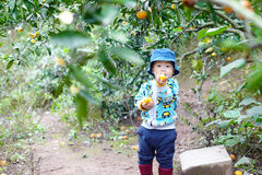 Αγόρι που επιλέγει ένα πορτοκάλι Στοκ φωτογραφίες με δικαίωμα ελεύθερης χρήσης